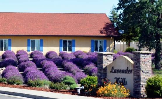Lavender Hills Assisted Living, LLC